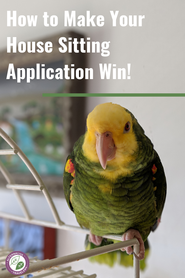 text: how to make your house sitting application win! overlaid on an image of a parrot